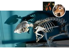 Harvard Museum of Natural History 26 Oxford Street Cambridge, MA 02138 617.495.3045