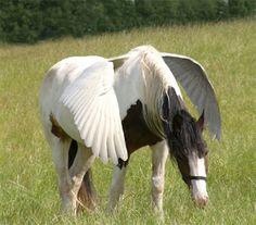 Pegasus!!!???