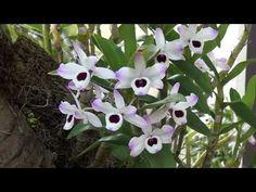 Horta, frutas e flores no jardim: Jardim com Orquídeas