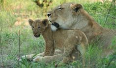 Mothers Day Captivating Photos To Celebrate Moms In The Animal Kingdom Wildlife Conservation, Kenya, Animal Kingdom, Mothers, Africa, Mom, Celebrities, Photos, Animals
