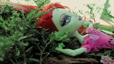 venus mcflytrap plant
