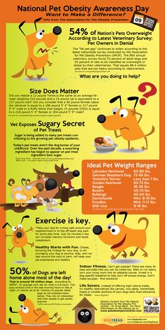 Learn More about Pet Obesity - dogtread.com