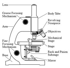 Parts and Functions of a Light Microscope (Part II) | Microscopic ...