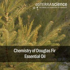 Chemistry of Douglas Fir Essential Oil