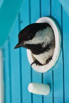 Bird. S)