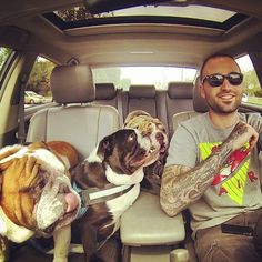 #bullylife #Padgram.. I want a huge family of bulldogs