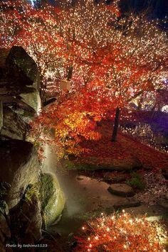 Autumn in Bihoku hill Park, Shobara, Hiroshima, Japan The Beautiful Country, Beautiful World, Beautiful Places, Japanese Landscape, Japanese Gardens, Go To Japan, Japan Trip, Taiwan, Hiroshima Japan