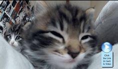 Cute cats! #Video  http://www.catvideooftheweek.com/videos/view/2789  #cvotw