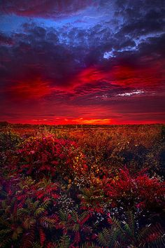 Connecting Print By Phil Koch