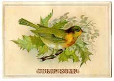 Vintage Advertising Graphic - Bird on Holly Branch - The Graphics Fairy