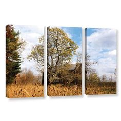 ArtWall Cvnp Barn by Cody York 3 Piece Photographic Print on Wrapped Canvas Set