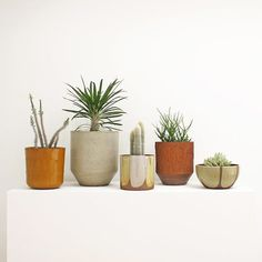 hildebrandtstudio:  Pro Artisan Collection of David Cressey ceramic vessels with plants, pre-Landscaping California exhibition, 1960s, California
