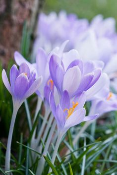 Untitled by Julia Stanley, via 500px (beautiful crocus!!!)