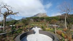 Trees South Africa - Roof top forest overlooking the Cape Town harbour Table Mountain, Roofing Materials, Roof Top, Cape Town, South Africa, Deck, Trees, Mansions, House Styles