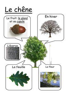 Oak tree Primary Science, Teaching Science, Science For Kids, Science And Nature, Teaching Kids, Activities For Kids, Fall Preschool, Nature Study, Plantation