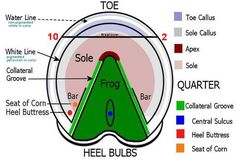 Pasture vs Barefoot Trim Pt. 4 - The Soul of the Sole – Scoot Boots