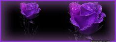 purple facebook covers - Google Search