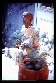 Image result for tulasi devi iskcon