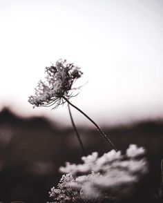 Mulberry Wine, Mister Wolf, Wild Photography, Grey Clouds, When You Smile, Autumn Leaves, Weed, Dandelion, Heaven