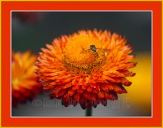 Floral images   Akashic Arts and Design