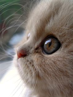 """""""In the morning, when she wishes me to wake, she crouches on my chest, and pats my face with her paw. Or, if I am on my side, she crouches looking into my face. Soft, soft touches of her paw. I open my eyes, say I don't want to wake. I close my eyes. Cat gently pats my eyelids. Cat licks my nose. Cat starts purring, two inches from my face. Cat, then, as I lie pretending to be asleep, delicately bites my nose. I laugh and sit up. At which she bounds off my bed and streaks downstairs -- to…"""