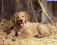 immagini di cane - Cerca con Google