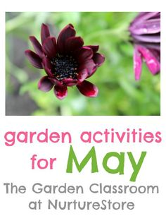Great tips and garden activities for May with ideas for gardening with kids