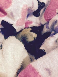 My George's teacuo chihuahua is the most nicest and beautiful dog u will ever see in ur life