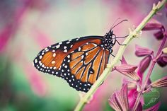 Epcot Butterfly House by kelleyrie, via Flickr