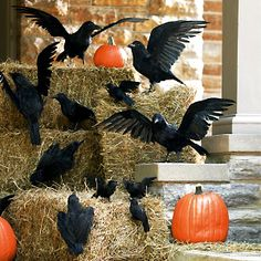 Outdoor Halloween decorations. Crows, pumpkins and hay bails.