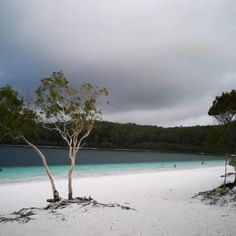 Best Tropical Vacations, Tropical Beaches, Travel Pictures Poses, Fraser Island, Travel Activities, Adventure Travel, Places To See, Tours, Islands