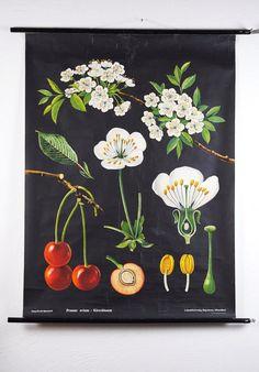 Vintage 1963 Jung Koch Quentell CHERRY Flower by GermanZeitgeist
