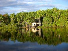 Amazonia incredible Mirror by Luti Guedes, via Flickr