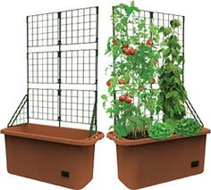 tomato cage pvc pipe and coiled - Google Search