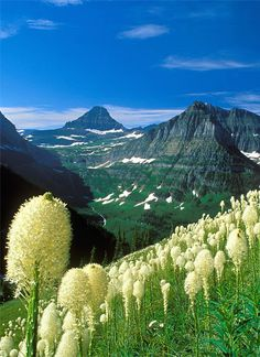 Glacier National Park,Montana,USA: