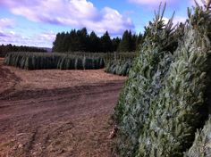 Get your very own freshly cut christmas tree delivered right to your doorstep! www.blchristmastree.com Fresh Cut Christmas Trees, Vineyard, Country Roads, Outdoor, Outdoors, Vine Yard, Vineyard Vines, Outdoor Games, Outdoor Life