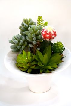 "Du Pot Assortment of Cactus - LG in White Pot 11""H"