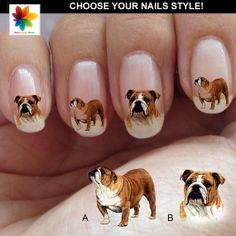 Bulldog 110 o 82 adesivi Waterslide Decal di Nailsgraphicworld, $6.90