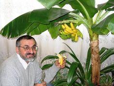 Banándzsungel a lakásodban!