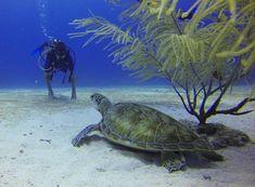 How to Scuba Dive without a Certification Cozumel Scuba Diving, Best Scuba Diving, Ecuador, Water Playground, Santa Ana, Centenario, Snorkelling, Baja California, White Sand Beach