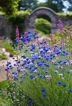 blue flowers . . . .