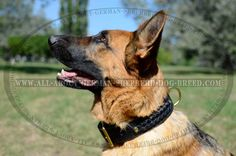 #Leather #Canine #Collar with Solid Brass Hardware $49.90 | www.all-about-german-shepherd-dog-breed.com