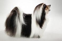 Породы собак | Pet Блог - Собаки, Кошки, Рыбы и мелких домашних животных Блог - Часть 4