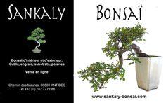 Un très bel Orme de Chine, Bonsai Semi-Cascade de presque 50 cm de hauteur disponible à la vente en ligne chez www.sankaly-bonsai.com http://www.sankaly-bonsai.com/achat-vente-acheter-bonsai-exterieur-feuillus-sankaly-bonsai/3147-vente-de-bonsai-orme-de-chine-48-cm-ormc140902-sankaly-bonsai.html