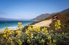 Garrapata State Beach - Carmel, California