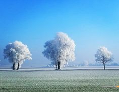 A Frost Storm Colored The Trees White. Bavaria Germany. [OC] [1672 x1309] #reddit