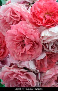 pink pink pink pink!