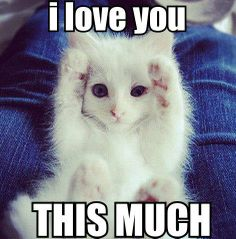 This is how much your kitty loves you!