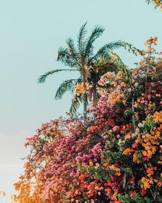beautiful flowers and plants No Rain, Flower Aesthetic, Aesthetic Girl, Aesthetic Pictures, Picture Wall, Picture Ideas, Pretty Pictures, Aesthetic Wallpapers, Cute Wallpapers
