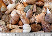 Decoshells Shell Mixes - Australian Seashells  shells for natural play